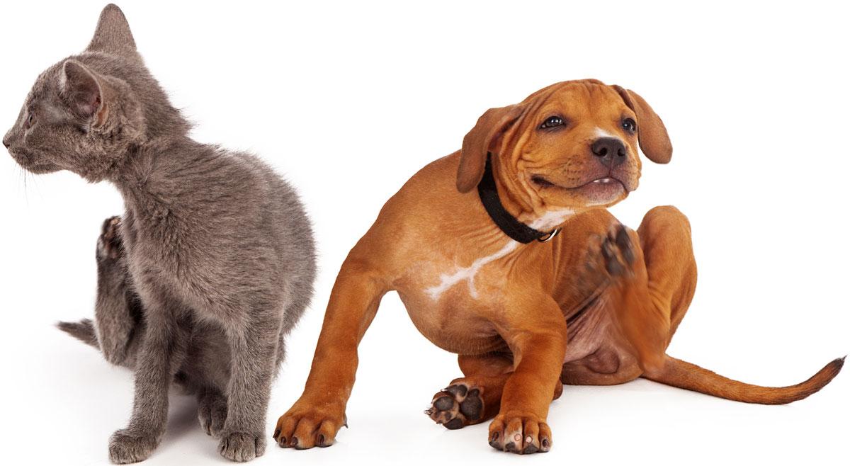 Pet Dermatologist