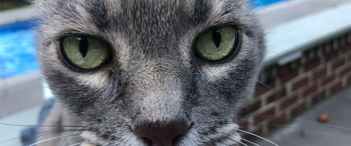 Chronic Disease Pain on Pets