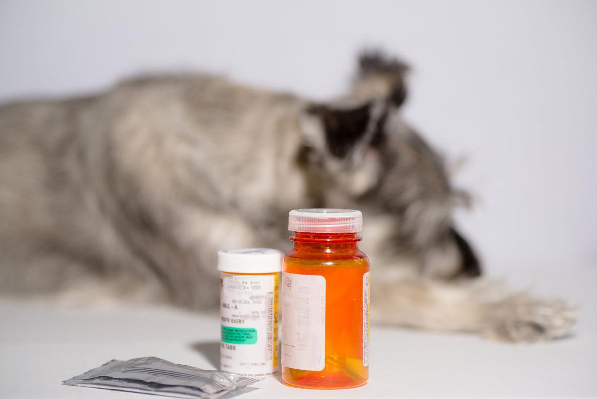 Pet Medication Richmond