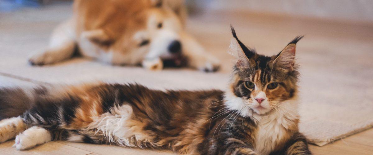 Richmond Veterinary Blog