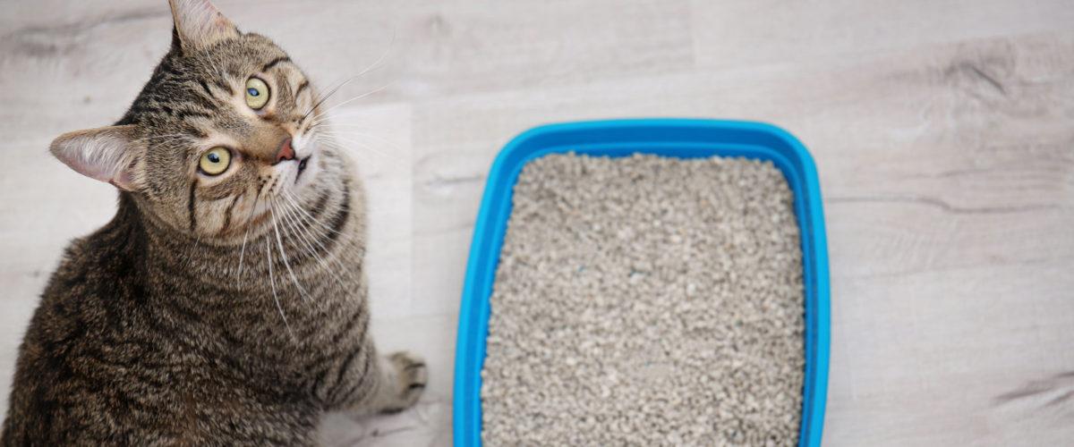 Understanding Feline Urinary Disease