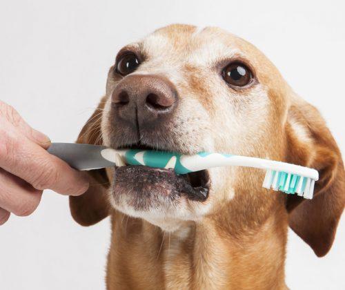 brushing-pet-teeth-banner