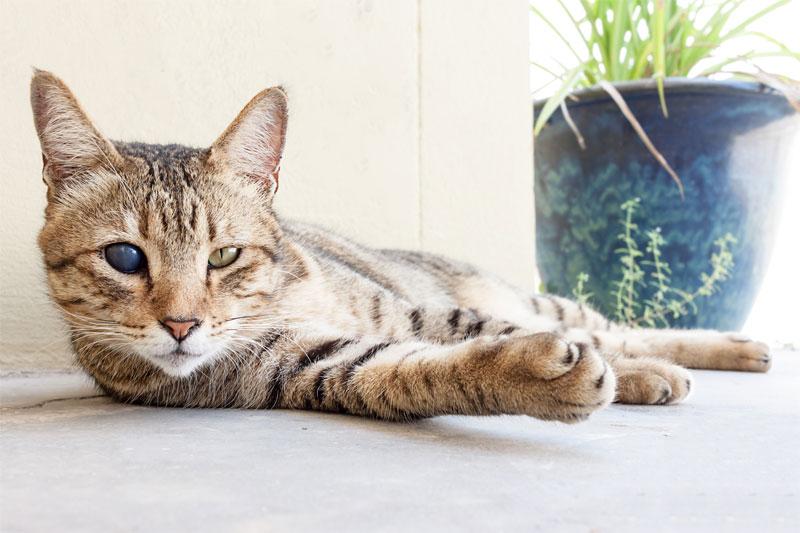 caring-for-blind-deaf-pets-strip1
